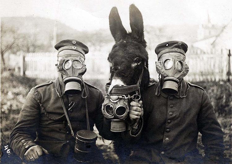 Tentara Jerman dan bagal dengan masker gas