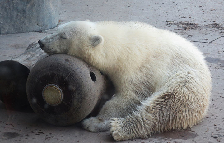 Bearly-Max